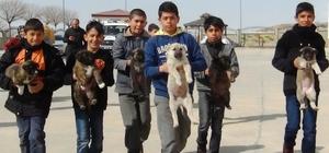 """Sokaktaki yavru köpeklere öğrenciler ve öğretmenler sahip çıktı Erciş Belediyesi Veteriner Hekimi İhsan Nuri Çiftci: """"Köpeklerin kulaklarının konuya vakıf olmayan kişiler tarafından kesilmesi tamamıyla bir vahşettir"""""""