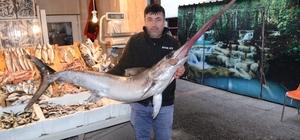 Kılıç balığı koyun fiyatına satıldı 2 metrelik kılıç balığı 2 bin 800 liradan alıcı buldu Kılıç balığının dili şaşkına çevirdi