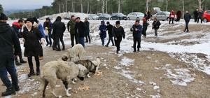 Cumhur ittifakı adayından örnek davranış Seçim çalışmalarını bırakıp Kazdağları'ndaki yaban hayvanlarına yem bırakıp beslediler