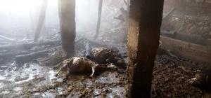 Ahır yangınında 48 küçükbaş hayvan telef oldu