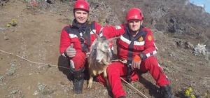 İtfaiye ekipleri, mahsur kalan keçi için seferber oldu