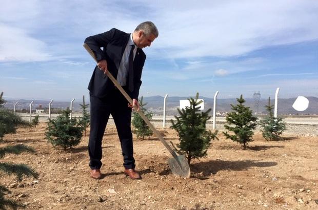 """Kırşehir'de Şehitler Haftası'nda hatıra ormanı oluşturuldu Şehit Aileleri Yardımlaşma ve Dayanışma Derneği Başkanı Mutlu Kılıçaslan: """"Bin 200 metrekare alana mavi ladin ağacı dikildi"""""""