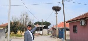Baharın müjdecisi leylekler Alaşehir'e geldi