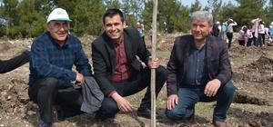 Selendi'de AK Parti, CHP ve MHP'li başkanlardan 'dostluk fidanı' Fidanlar toprakla buluştu