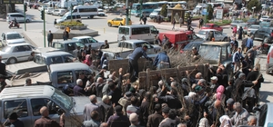 Tosya'da 6 bin adet fidan dağıtıldı