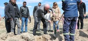 Odunpazarı Belediyesi Ahbap Derneği ile 2  bin 500 fidan dikti
