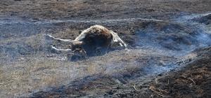 Maden hafriyat sahasında yangın Yangında bir büyükbaş hayvan telef oldu
