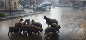 Yavuzeli'ni sağanak vurdu 3 gündür etkili olan yağmur hayatı felç etti, tarım arazilerinde hasar oluştu