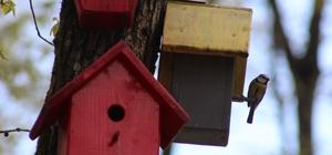 (Özel) Bu parktaki kuşların yaşamları internet üzerinden gözlem altında Kameralar, kuşların yuvalarındaki yaşamlarını evlere taşıdı Vatandaşlar, kuşların yuvalarındaki yaşamlarını 24 saat boyunca gözlemleyebiliyor