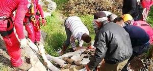 Söke'de inek kurtarma operasyonu Söke'de mahsur kalan ineği Kuşadası AKUT ekibi kurtardı