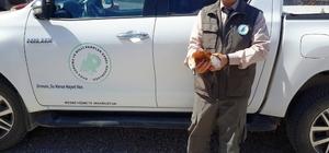 Doğada bulunan angut kuşu koruma altına alındı