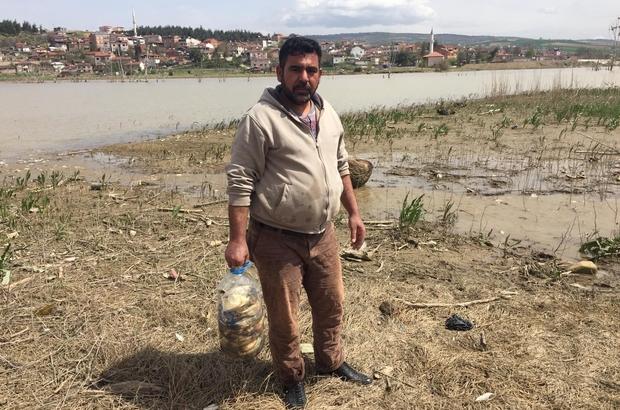 Bursa'nın İnegöl ilçesindeki Boğazköy barajında sular çekilince on binlerce balık kıyıya vurdu. ile ilgili görsel sonucu