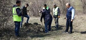 Kastamonu'da Trüf Mantarlı Meşe Fidanları dikildi