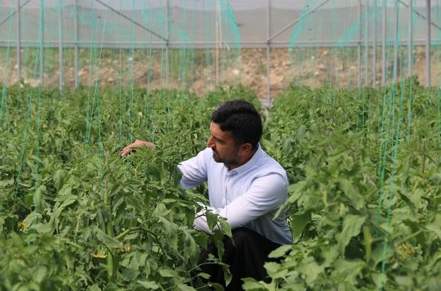 Gençlere örnek oldu Adanalı Bekir Eray Çelikoğlu, Tarım ve Orman Bakanlığı'nın 'Genç Çiftçi Projesi' kapsamında sağlanan destekle örtü altında 20 ton domates ve hıyar üreterek 30 bin lira kar etti