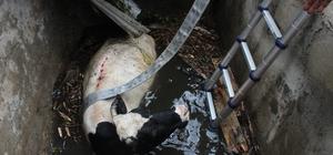 2 metre derinlikteki su kuyusuna düşen ineği itfaiye ekipleri kurtardı İtfaiye araçları bahçeye giremeyince vatandaşlar yardıma koştu Yaklaşık yarım saatlik çaba ile kurtarılan ineğin sağlık durumunun iyi olduğu belirlendi