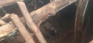 Bingöl'de 15 kuzuyu, ayılar telef etti