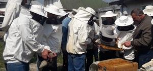 DAGEM Bölge arıcılarına ana arı ve arı sütü üretimini öğretti