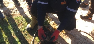 Kuyuya düşen oğlak yavrusunu itfaiye kurtardı