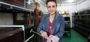 """Kadınlar ev ekonomisine süs balığıyla katkı sağlıyor Adana'da Akvaryum Balığı Yetiştiriçiliği Projesi kapsamında 10 kadına verilen anaç balıklar ilk hasadını yaptı Adana Tarım ve Orman Müdürü Muhammet Ali Tekin: """"Kadın çiftçimizin aile bütçesine aylık 2 bin 500 TL katkıda bulunmuş olacağız"""""""