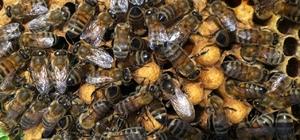 Ulaştırma Bakanlığı'ndan arılara geçiş üstünlüğü getirildi Aydın Arı Yetiştiricileri Birliği Başkanı Özdemir: Bakanlığın talimatı ile sektörün önemli bir sıkıntısı çözüldü