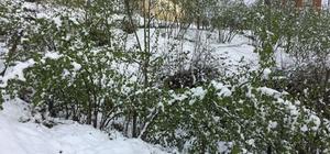 Karadeniz'e yağan kar fındık üreticisini korkuttu