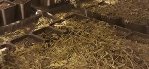 500 kilogram esrar ele geçirildi