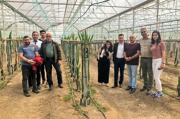 Türkiye'nin en geç kadın muhtarı Ovacıklı Şilan, Antalya'da tarım alanlarını gezdi Antalya'da gördüklerini Ovacık'ta uygulaması sözü verdi
