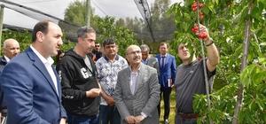 Adana'da ihracatlık kiraz üretimine başlandı