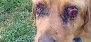 Gözleri oyulduğu iddia edilmişti, hasta çıktı