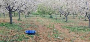 Çiftçilerden böceklere 'mavi leğenli' önlem Üreticilerden zararlı böceklere karşı ilginç yöntem