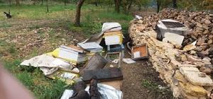 (Özel) Uludağ'da ayılar  bu köye dadandı...Her gün köye gelip kovanları parçalıyor