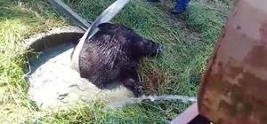 Su kuyusuna düşen yaban domuzunu itfaiye ekipleri kurtardı