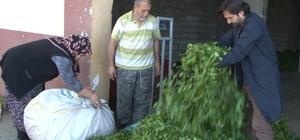 Yaş çay taban fiyatı bugün açıklanıyor Tarım ve Orman Bakanı Dr. Bekir Pakdemirli yaş çay taban fiyatını açıklamak için bugün Rize'de olacak Çay üreticisinin beklentisi 3 lira 10 kuruş