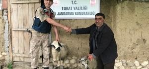 Çalınan koyun ve kazlarına kavuştular