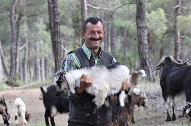 (Özel)Bu çiftin evi 32 yıldır ormanlar Dağlarda insan yüzü görmeden çobanlık yaparak geçimlerini sağlıyorlar