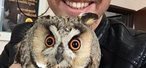 Nesli tükenmekte olan boynuzlu baykuşu yakalayıp selfie çektikten sonra doğaya bıraktılar