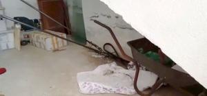 Seydikemer'de itfaiyeden yılan yakalama operasyonu