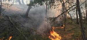 Eskişehir'de iki farklı noktada orman yangını Düşen yıldırımlar 2 farklı ormanda yangına neden oldu