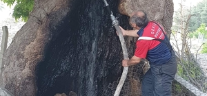 Asırların deviremediği çınarı ateşe verdiler 300 yaşındaki büyük çınar ağacının oyuğundan tutuşturup yakmak istediler