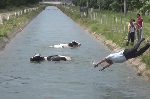 Sulama kanalına düşen hayvanlar için itfaiye ve vatandaşlar seferber oldu