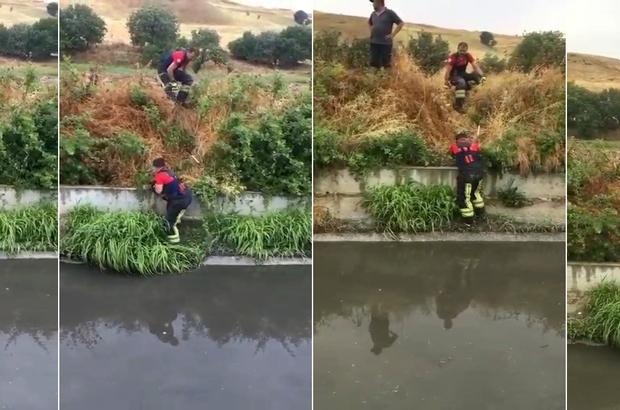 Sulama kanalında mahsur kalan köpekleri itfaiye kurtardı