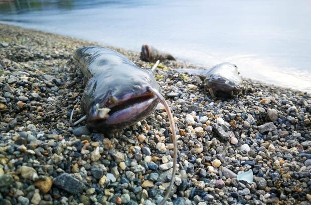 İznik Gölü'nde balık ölümleri