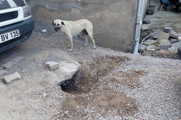 Mahsur kalan yavru köpek için seferber oldular Çukura düşen köpeği mahalleli kurtardı