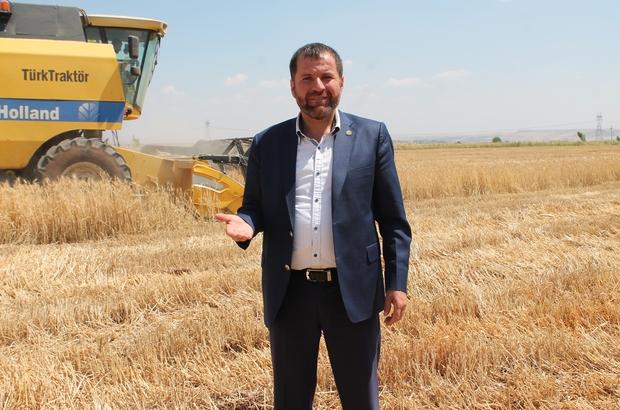 """Diyarbakır'da yılın ilk buğday hasadı yapıldı Yenişehir Ziraat Odası Başkanı Süleyman İskenderoğlu: """"Bu yılki buğday hasadı geçtiğimiz yıldan daha iyi"""""""