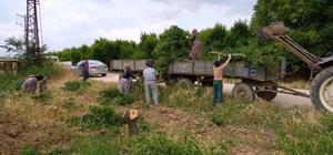 30 bin meyve ağacı kesildi Üretici son çareyi verimli ağaçlarını kesmekte buldu