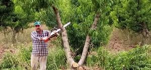 (Özel) Bursa'da kesilen meyve ağacı sayısı 60 bine ulaştı, o anlar havadan görüntülendi Bursa şeftalisi zor günler yaşıyor Kar marjı azalan çiftçi sebze yetiştirmek için her gün yüzlerce meyve ağacını kesiyor