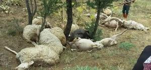 Denizli'de üzerine yıldırım düşen 15 koyun telef oldu