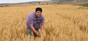 Trakya çiftçisinin yüzü gülüyor Nisan yağmurları verimi arttırdı, çiftçinin yüzünü güldürdü