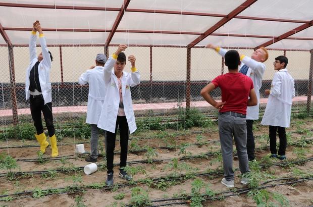 Tarım Lisesi öğrencileri, çiftçi oluyor