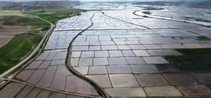 (ÖZEL) Beyaz altın tarlaları havadan görüntülendi Bir kilimin desenlerini andıran pirinç tarlalarından kartpostallık görüntüler ortaya çıktı